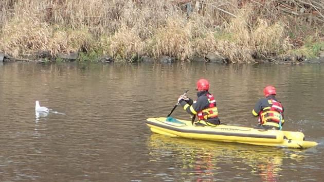 Uvízlý za nohy v igelitovém sáčku naplněném vodou plul řekou Odrou racek, kterému pak život zachránili profesionální hasiči.