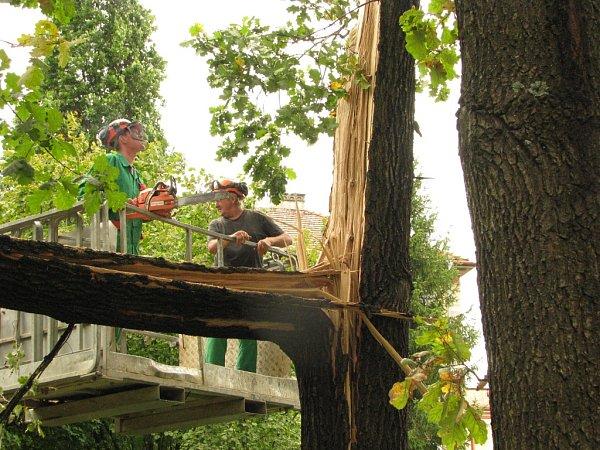 Mohutný strom sprasknutým kmenem museli skácet dřevorubci.