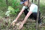 Houbový úlovek z orlovského lesa, 20. května 2019