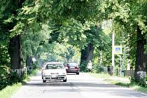 Stromořadí bude vykáceno a nahrazeno novou alejí. Silnice bude rozšířena.