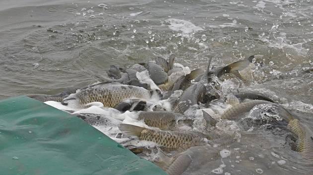 spousta ryb v moři zdarma seznamka