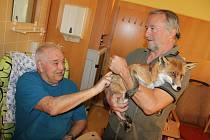 Návštěva lišky v Domově seniorů Havířov - středisku Helios.