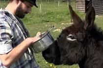 Snímek z filmu Pokojovice Heraltice SŠ Sýkorova Havířov.