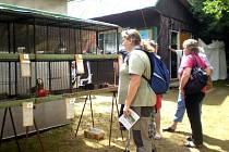 Výstava chovatelů králíků a drůbeže v Orlové.