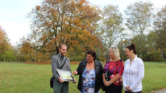 Zachráněný platan (v pozadí) v havířovském zámeckém parku získal diplom v národní soutěži.