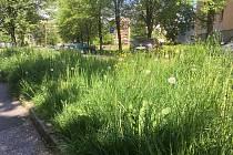 Vysoká tráva v Mládežnické ulici.