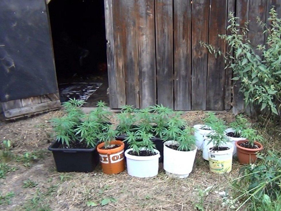 Odhalená pěstírna marihuany.