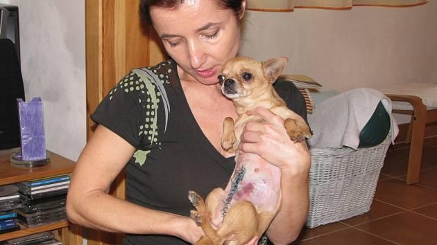 Andrea Dunová se zachráněnou čivavou ze slovenské klecové množírny.
