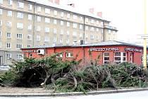 Na náměstí TGM v Havířově-Šumbarku se připravuje celková rekonstrukce. Začalo se kácením stromů a keřů.