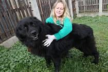 Psi patří mezi nejoblíbenější zvířecí kamarády lidí. Ilustrační foto: