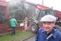 Kácení vánočního stromu v soukromé zahradě. Na snímku v popředí majitel Vilém Slezák.