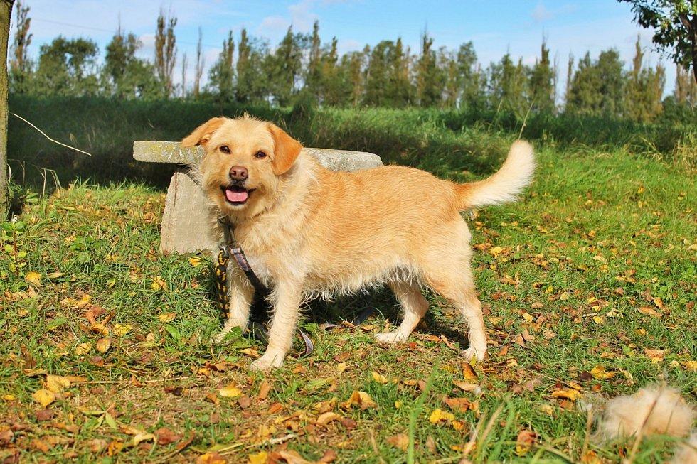 Psi, o které v posledních měsících pečovali v útulku v Dětmarovicích. Někteří z nich už našli i nový domov.