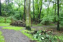 Karvinský lesopark Dubina prokoukne. Město začalo s jeho revitalizaci. Nové budou chodníky i odpočívky.