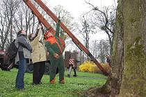V Zámeckém parku rostou stromy starší 300 let.