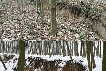 Zvětšující se trhlina v doubravském lese v březnu 2017 (nahoře) a v únoru letošního roku.