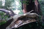 Bouřkou zlomený strom spadl do koryta řeky Lučiny v Havířově.