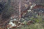 Jedna z děr v plotu, kterou do sadů přicházejí zloději jablek, srnky i psi.