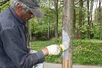 Ošetření psem poškozených stromů.