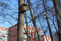 Budky pro sovy jsou v blízkosti obydlených částí města.