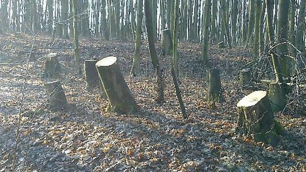 Ukradené stromy...