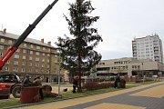 Silný vítr poškodil vánoční strom na náměstí TGM v Havířově-Šumbarku. Kvůli prasklému kmeni musel být předčasně skácen.