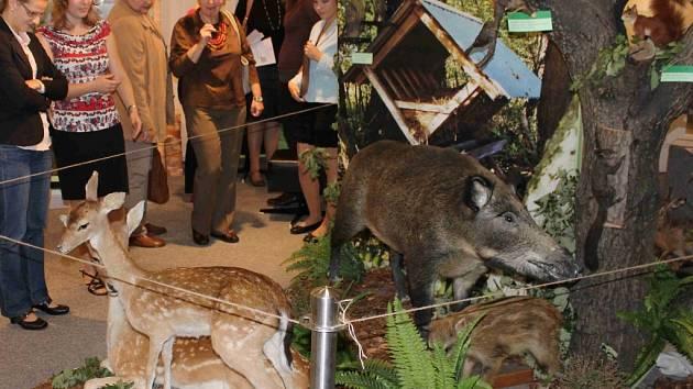 Prostory výstavní síně Muzea Těšínska v Orlové jsou plné vycpaných zvířat.