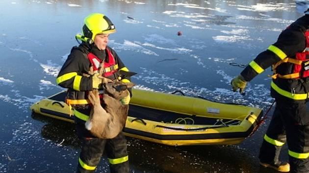 Hasiči zachránili srnce ze zamrzlého rybníka.