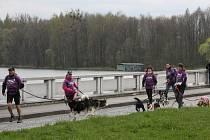 První jarní psí trek od Žermanické přehrady kolem Těrlické přehrady.