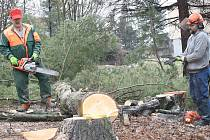 První přípravy na výstavbu nového náměstí v centru Orlové jsou už v plném proudu. Nyní probíhá kácení stromů a keřů, které by stavbě překážely.