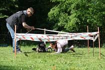 Příjemné branné dopoledne si užili pejskaři a jejich psíci na závodech v Peřvaldě.