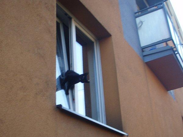 Hasiči vČeském Těšíně zachraňovali kočku, která uvízla vokně.