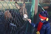 Dětem se krmení oslíka a koz líbilo.