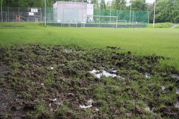 Divoká prasata zryla kraj tréninkového hřiště vDolních Datyních.