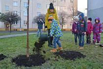 Zástupci spolku onkologických pacientů PRO FIT 12 spolu se zástupci města a dětmi ze ZŠ Masarykova zasadili v Bohumíně sakury naděje.