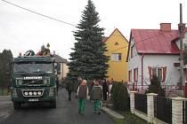 Vánoční strom ještě na svém původním místě v Šumbarské ulici těsně před skácením.