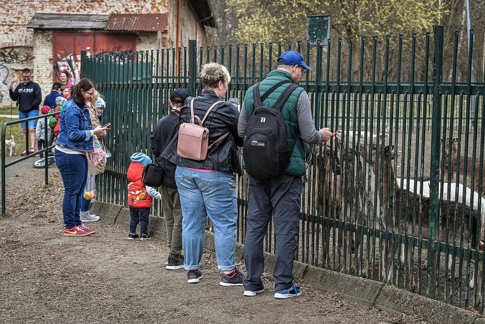Daňčí obora v parku Boženy Němcové, 27. března 2021 v Karivné.