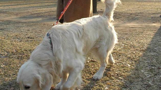 Venčení psů má již několik let svá pravidla
