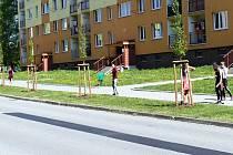 Ulici M. Pujmanové v Havířově-Šumbarku lemuje nové stromořadí z 29 habrů.