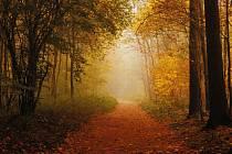 Podzimní rána v havířovském lesoparku.