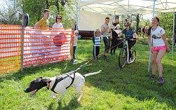 V Doubravě se o víkendu konal závor běžců a jezdců tažených psy.