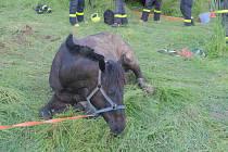 Záchrana jezdeckého koně na Karvinsku.