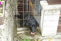 Pes uvězněný v pletivu.
