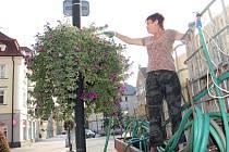 Převislé muškáty v pyramidách a letničky v květináčích v centru Českého Těšína se musí v horkém počasí zalévat i dvakrát denně.