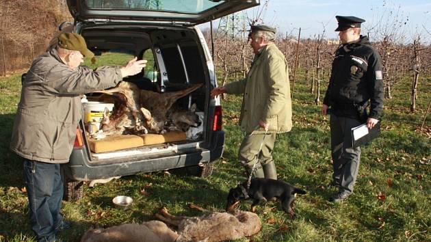 Zdivočelí psi zaútočili na srnčí zvěř v ovocnářských sadech.