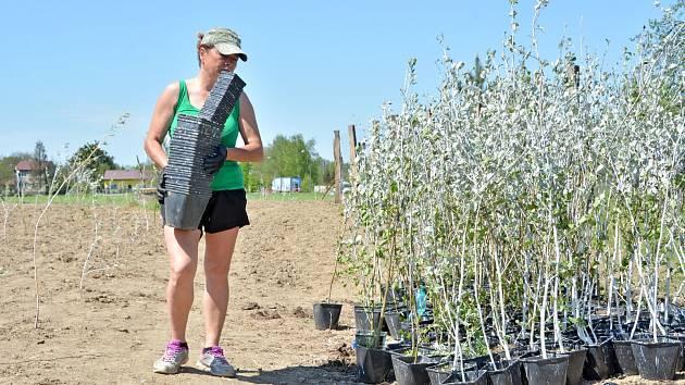 Nedaleko výpadovky na Karvinou založilo město Bohumín nový lesík, červen 2021.