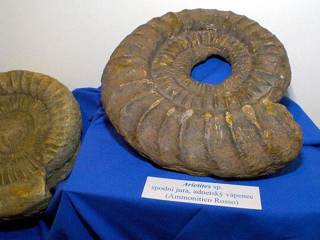 Vystavené zkameněliny