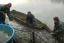 Výlov rybníku. Ilustrační foto