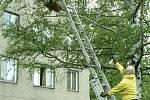 K zásahům proti bodavému hmyzu vyjíždějí dobrovolní hasiči. Ne vždy je ale jejich zákrok nutný.