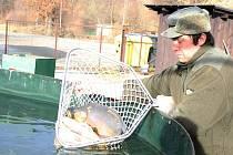 Prodej vánočních ryb
