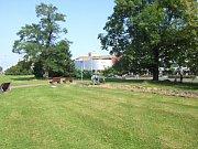 Z nepřehlédnutelných chráněných stromů zůstaly na náměstí Republiky akát (vlevo) a jasan.